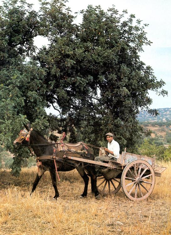 Carretto siciliano in campagna.