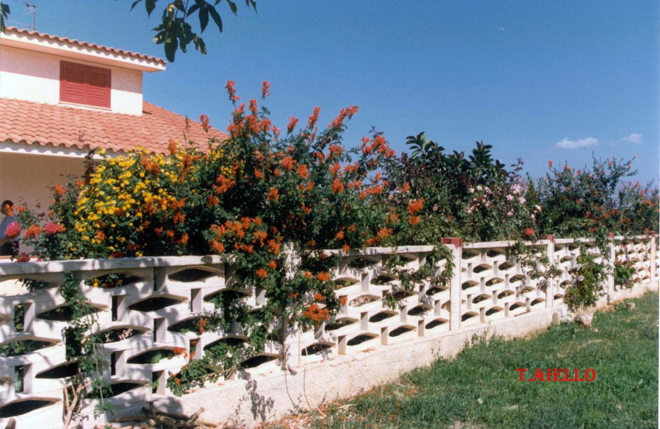 Blog di tommaso aiello sicilia terra di culture - Giardino di campagna ...