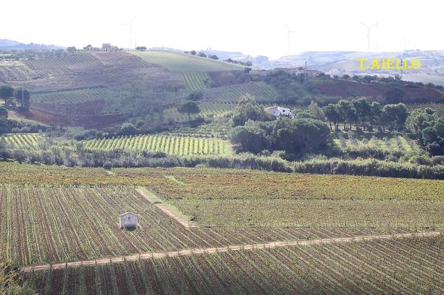 Terreni coltivati a vigneto